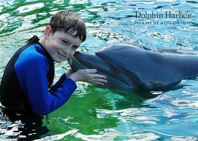 dolphin 016 (Small).jpg