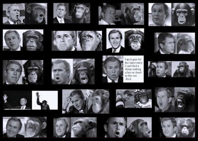 bush-monkey_big.jpg