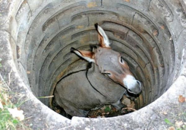 sewer_horse_ass_hole_485643c6e3757.jpg