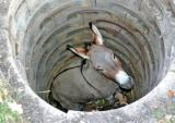 sewer_horse_ass_hole_485643c6e3757.jpg