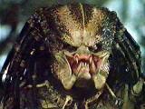 predator_large_17.jpg